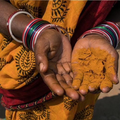 Femme indienne tenant des épices de curcuma