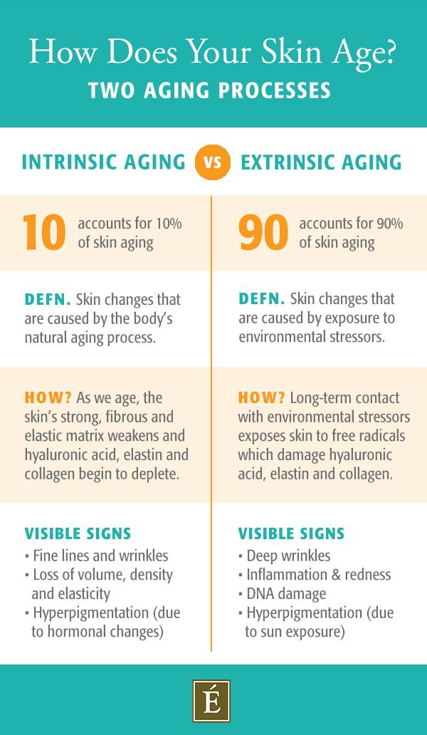 infographie sur le vieillissement intrinsèque vs extrinsèque