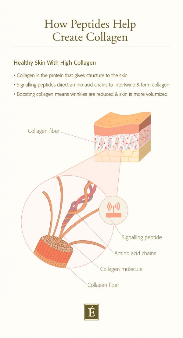 Comment les peptides aident à créer du collagène